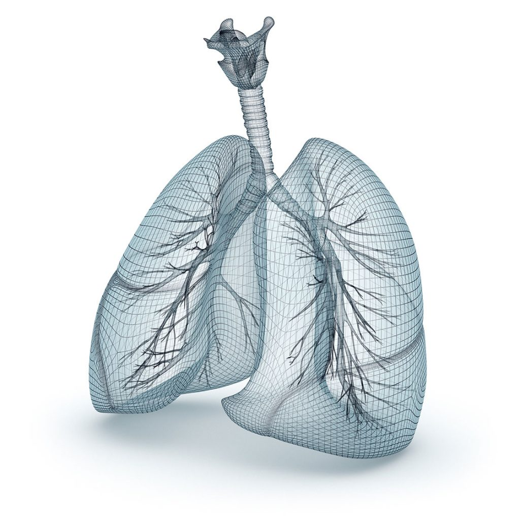 respiratory-system-3d-wireframe