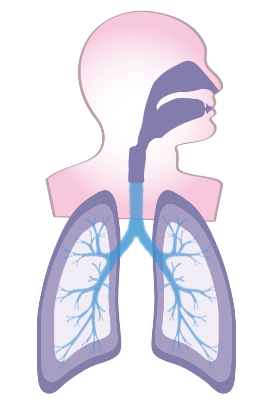respiratory-diagram